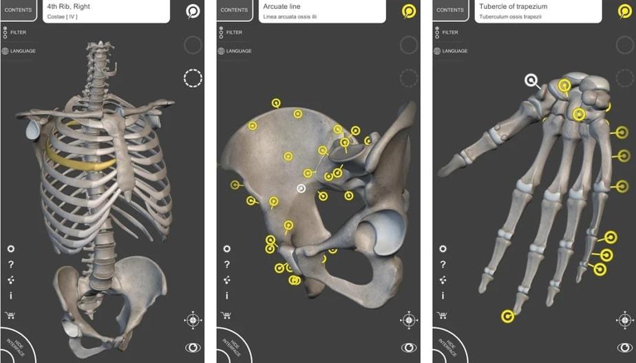 3d anatomy app, anatomy learning app